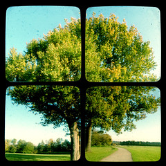 Tree Quadtych