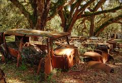 Old Cars (Bravo_Kilo) Tags: old camping classic cars car canon rust canon20d cumberlandisland hdr cumberlandislandnationalseashore
