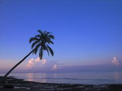 reaching out (mikes&mugs) Tags: sea sky reflection beach clouds dawn palmtree specnature abigfave iipcphoto