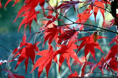 EcoSistema — ¿A qué se debe el color rojo de las hojas de árbol...