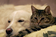 Buddies Forever (Padrone) Tags: clem 70200mm 1600iso miesha 28is impressedbeauty