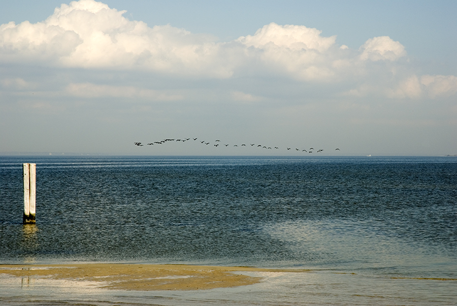 birds over the bay