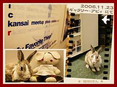 fukusuke-pon  (fukusuke-pon ) Tags: pet rabbit bunny japan meetup conejo osaka kansai coelho kaninchen coniglio