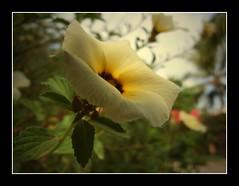 Fiore d`Autunno - by allegra_