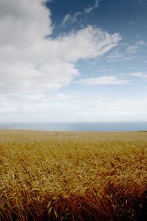 Grain by the Sea