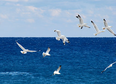 Seagulls (esther**) Tags: blue sea sky seagulls birds clouds fly bravo gulls hellas 2006 greece rhodes interestingness19 interestingness62 sonydsch5 abigfave
