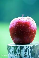 Crisp (mrkholcomb Images) Tags: red ga velvia nikonf5 applered