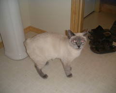 Small (tashwayne) Tags: 2001 cats cat small alabama