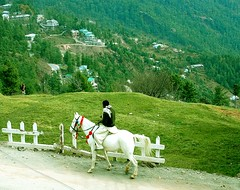 horse in murree