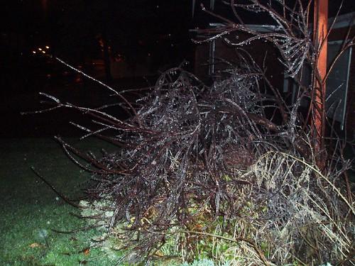Ice Storm 2006_04
