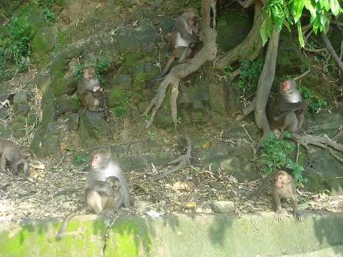 monkeys on the mountain