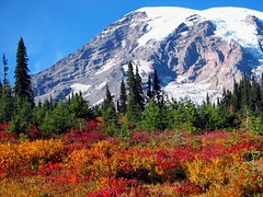 paradise (another story) Tags: autumn mountain snow color nature landscape outdoors volcano washington paradise northwest hiking vivid glacier foliage rainier cascades pacificnorthwest mtrainier mtrainiernationalpark paradisetrails impressedbeauty