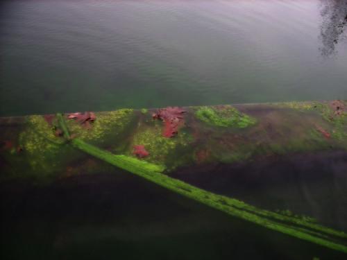 algae — Jan 23