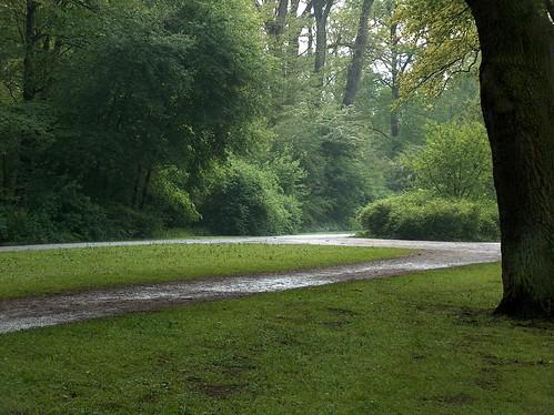 Caminho verde por Moshélio.