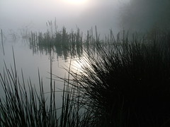 Slough Dawn (Kevin Day) Tags: uk england reflection water sunrise reeds dawn peace britain buckinghamshire calm serene kevday