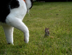death walks behind you ! (cloud_nine) Tags: cats nature animal cat ilovenature mouse paula cloud9 c9 cloudnine 100000views topvaforitedbyflickr hp850 anawesomeshot flickrdiamond 1000commentsfaves