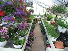 Greenhouse (djen) Tags: greenhouse flowers
