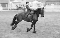 Man05_bw (eschneider) Tags: friesian manchester deerfield nh horses saddleseat horseshow