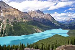 Peyto Lake (Chris & Lara Pawluk) Tags: chris wallpaper lake canada topf25 rockies saveme3 deleteme10 alberta glacial peytolake peyto rockflour