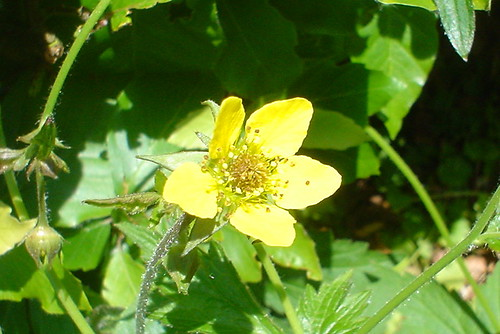 Herb bennet | Flickr - Photo Sharing!