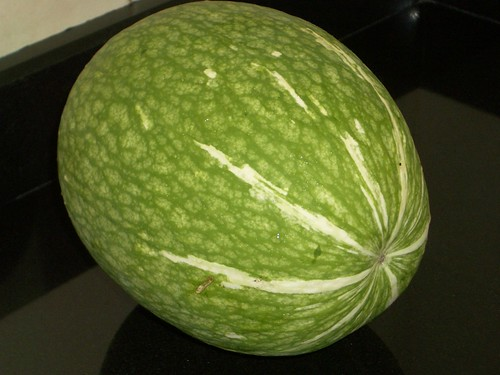 shark fin melon. Sharkfin Melon by eatzycath