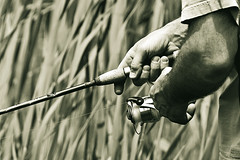 Fishing The Reeds (bikeracer) Tags: park blackandwhite lake deleteme6 grass sepia 1025fav reeds fishing weeds hands savedbythedeletemegroup state tritone line saveme10 rod harriman itsongselection1 welch reel perfectingladolcevita itsong–canoneos300d interestingness123 i500 explore6jun05 chromatoned