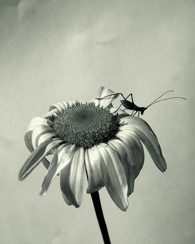 http://farm1.static.flickr.com/12/18112268_0cd61f74ab.jpg