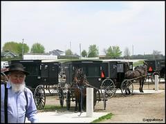 Amish Parking Lot (appaIoosa) Tags: horses horse animal animals caballo cheval appaloosa indiana amish buggy pferde cavallo paarden appaloosa