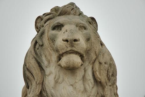 Lion Face 4