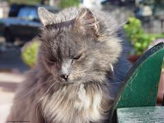 Gentle Girl (Sarah Bellam) Tags: cats kitties pets animals