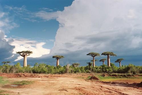 Madagascar flickr photo