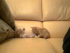 Kitten Porn (cc) by *n3wjack's world in pixels via Flickr