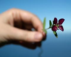 purple flower offering (Sara Heinrichs (awfulsara)) Tags: deleteme deleteme2 deleteme3 deleteme4 deleteme5 saveme deleteme6 deletme7 deleteme8 saveme2 deleteme9 deleteme10