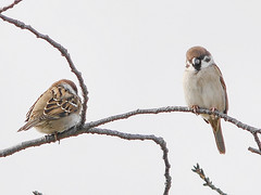 161211_GX7_1450953 (kuad9) Tags: bird