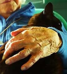 That's my cat. (algo) Tags: love cat photography topf50 bravo hand gutentag topv1111 attachment caring algo oldage flickrsoupforthesoul dependence fsftsblog exploretop20