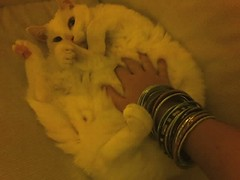 Mr Kitty having his tummy tickled