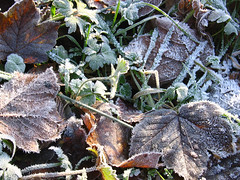 Winter Is Coming (photojennic) Tags: christmas uk november autumn winter white snow color colour macro nature leaves closeup mrjackfrost tag3 taggedout ilovenature scotland leaf nice frost tag2 tag1 inho britain great border scottish peebles greatshot macros closeups scottishborders photojennic thebiggestgroup msh0409 msh04093