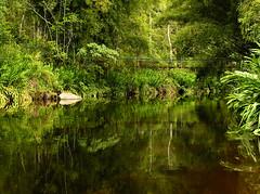 (zenog) Tags: ~~ rio river riviere fiume flu depoisdachuva cocacolacolor couleurdecaramel likeapalealebeer caf birdsongpourcaro