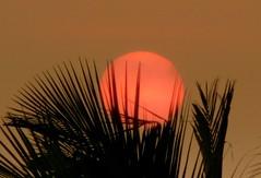 Romancing the sun II