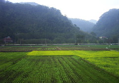 (judie35) Tags: winter field taiwan sanyi
