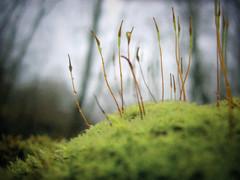 The Faerie-Knoll (Dave Ward Photography) Tags: usa macro nature closeup forest us washington moss woods flora unitedstates unfound 2006 fairy bellingham wa fairies faerie faeries microlandscape whatcom davewardsmaragd pss:opd=1138613124