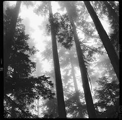plate 96. (koaflashboy) Tags: blackandwhite tlr film monochrome mediumformat landscape washington deleteme10 fineart saveme10 ilfordfp4 naturesfinest ciroflex halflightphotography
