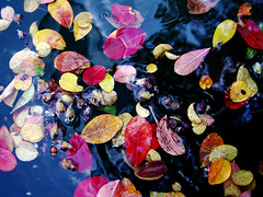 Autumn mosaic (JenniferNelms) Tags: autumn 3 flower reflection fall nature water leaves botanical interestingness colorful jen explore interestingness3 cotcmostinteresting i500 mywinners abigfave cotcbestof2006 naturetrophy jenatl