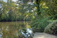 Second---Lili-Pad-and-River (jason_minahan) Tags: park tree forest nj princeton hdr mercercounty xti
