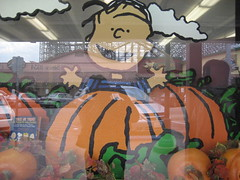 it's the great pumpkin, charlie brown! (_melika_) Tags: pumpkin peanuts linus windowdisplay knotts knottsberryfarm greatpumpkin