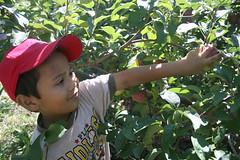 IMG_0226 (tomasati) Tags: kita buah dikebun