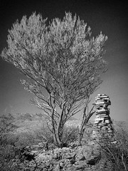 the burning bush, arkaroola - see photo on flickr