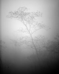 Held in the Light (oldoinyo) Tags: blue autumn blackandwhite mist tree nature graveyard fog landscape nebel north ridge parkway carolina fields naturesfinest
