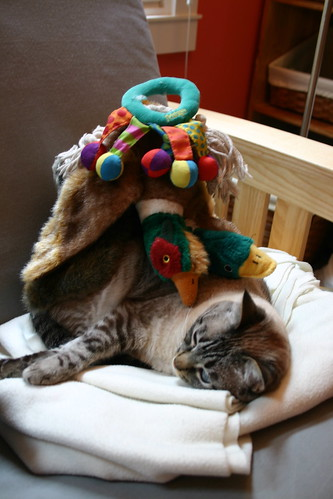 Stuff on my cat