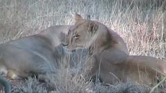 safari009
